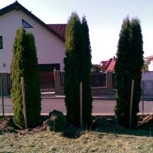 stromypovsadb